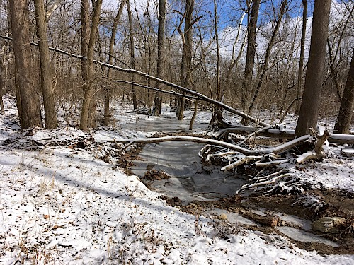 A hiking tail in the winter with a frozen creek and a snow covering the ground.