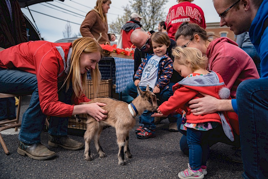 A family at the farmers market introduces their small child to a baby goat, who eats out of the child's hand