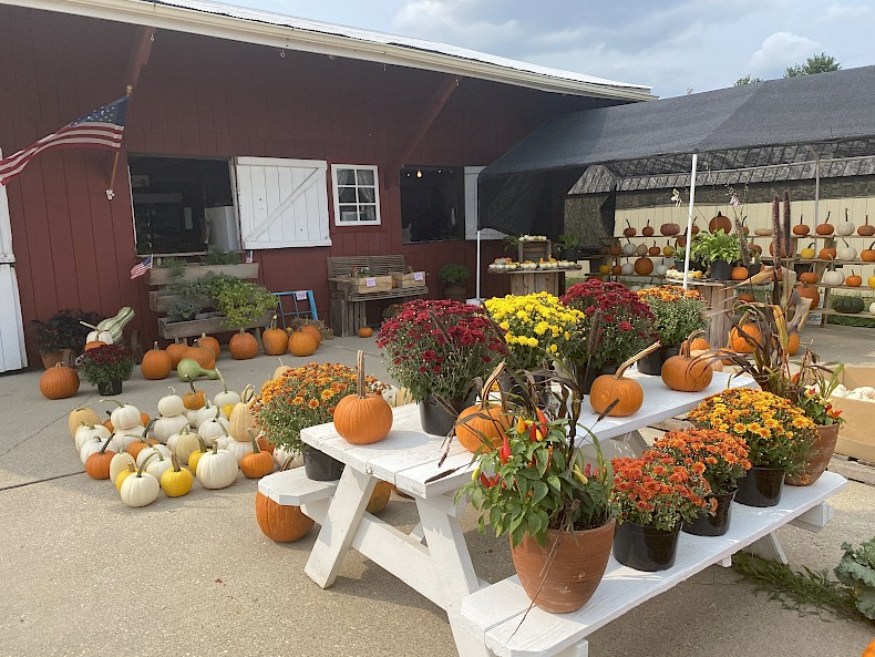 Pumpkins and mums decorate the outside of the market, on the ground and on a white picnic table