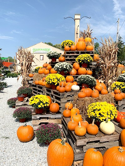 A giant pumpkin and mum display outside at Shademakers garden center